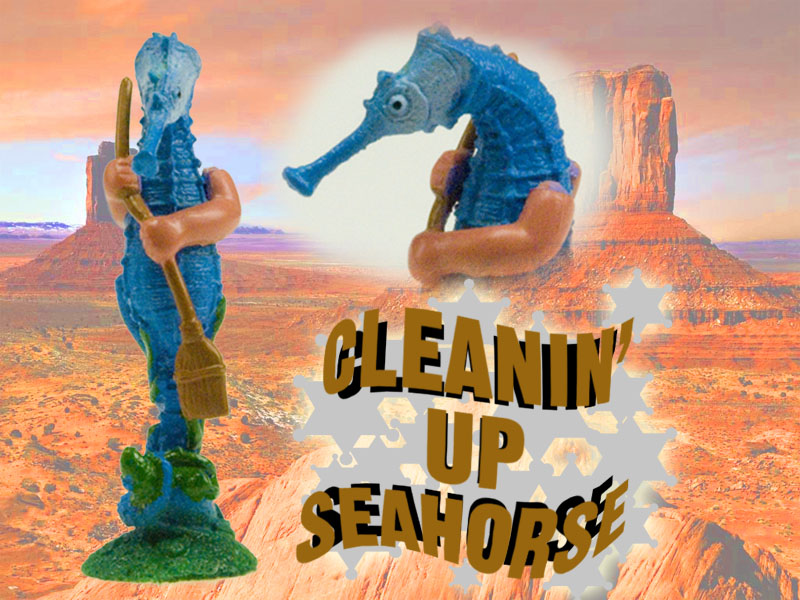 cleanin' up seahorse